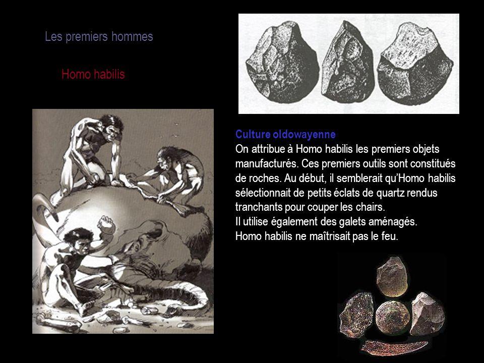 Les premiers hommes Homo habilis Culture oldowayenne