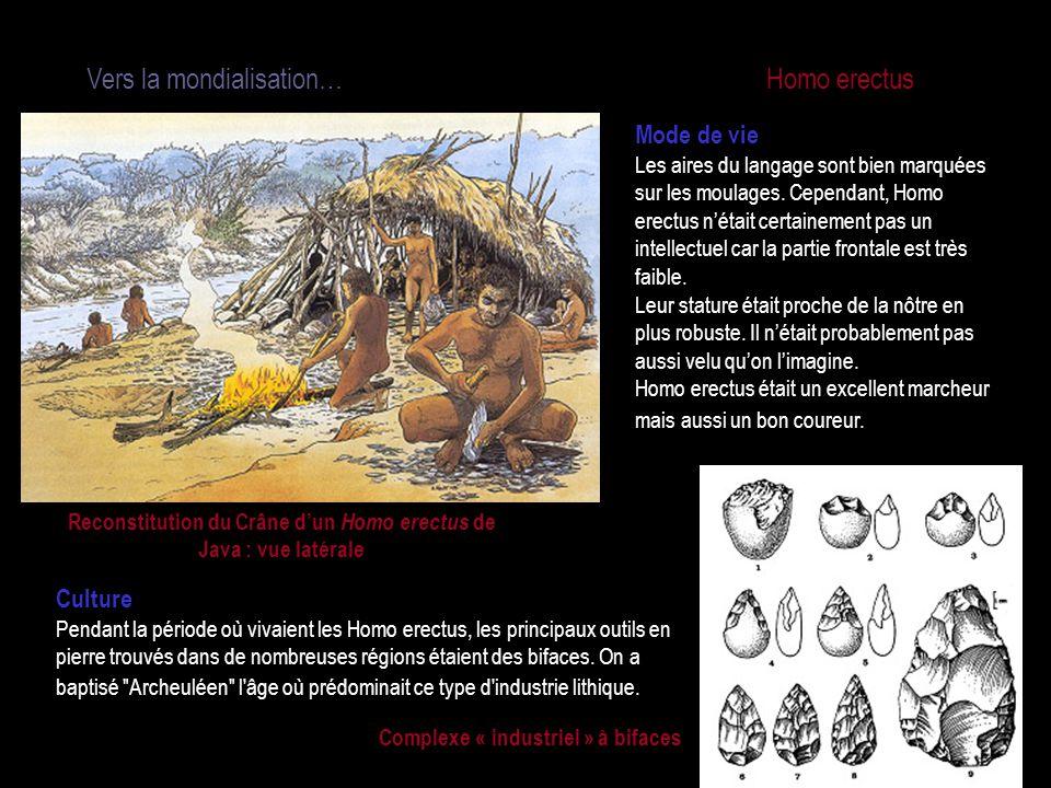 Vers la mondialisation… Homo erectus