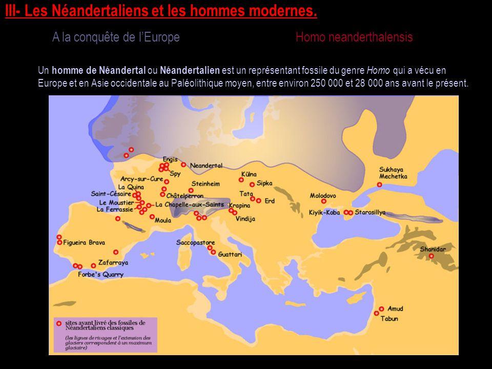 III- Les Néandertaliens et les hommes modernes.