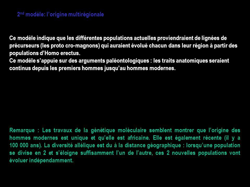 2nd modèle: l'origine multirégionale