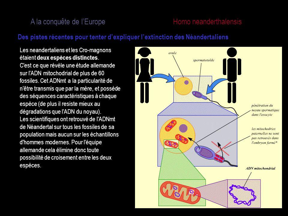 A la conquête de l'Europe Homo neanderthalensis