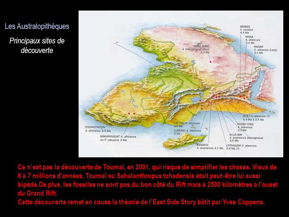 Les Australopithèques Les Australopithèques