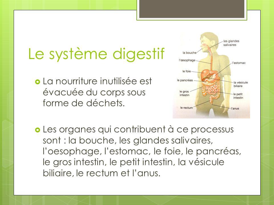 Le système digestif La nourriture inutilisée est évacuée du corps sous forme de déchets.