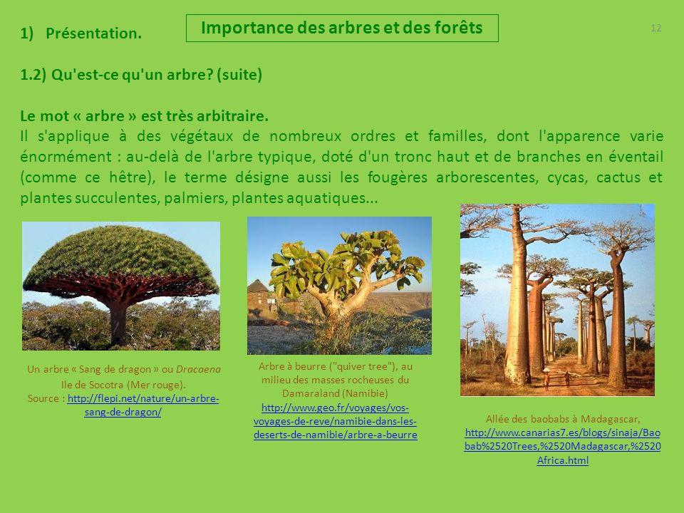 Importance des arbres et des for ts pr sentation r les - Qu est ce qu un attrape reve ...