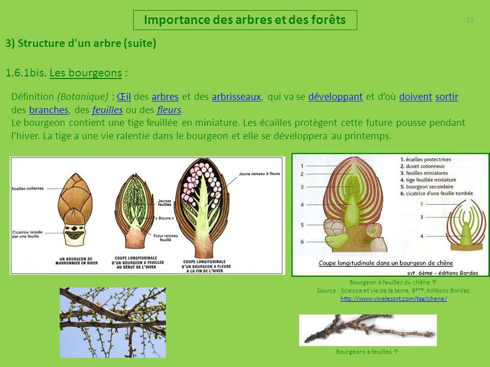 Importance des arbres et des for ts pr sentation r les - Jeux de tronconneuse qui coupe les arbres ...