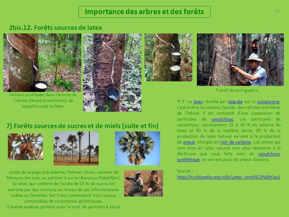 Importance des arbres et des for ts pr sentation r les for Portent ses fruits