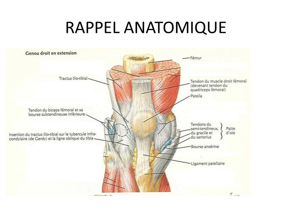 Groß Tractus Anatomie Fotos - Menschliche Anatomie Bilder ...