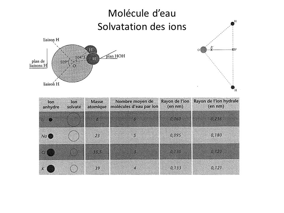 Molécule d'eau Solvatation des ions