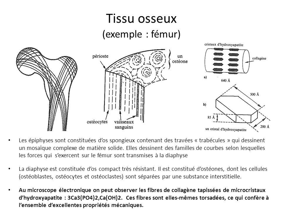 Tissu osseux (exemple : fémur)