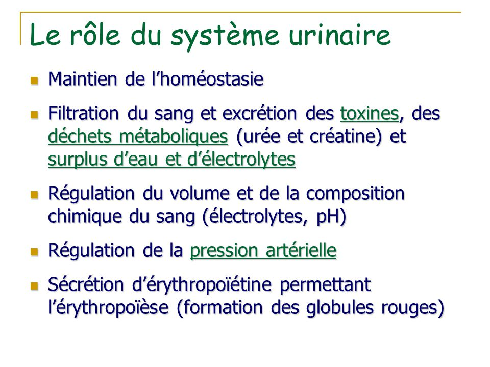 Le rôle du système urinaire