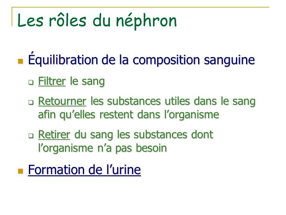 Les rôles du néphron Équilibration de la composition sanguine