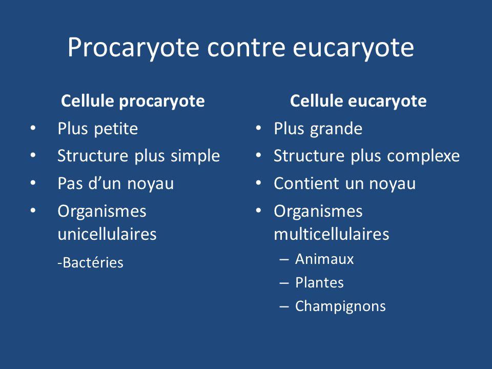 Procaryote contre eucaryote
