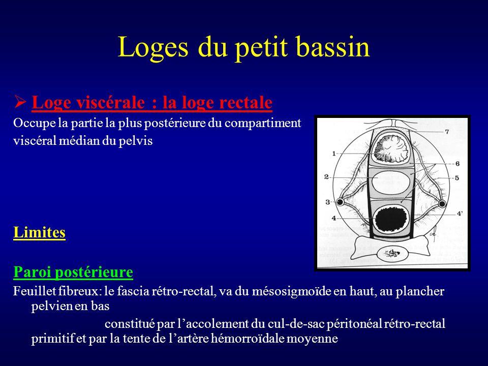 Loges du petit bassin Loge viscérale : la loge rectale Limites