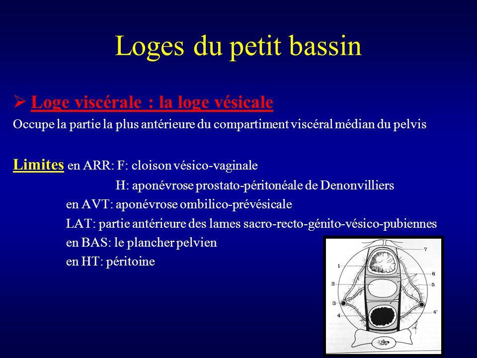 Loges du petit bassin Loge viscérale : la loge vésicale