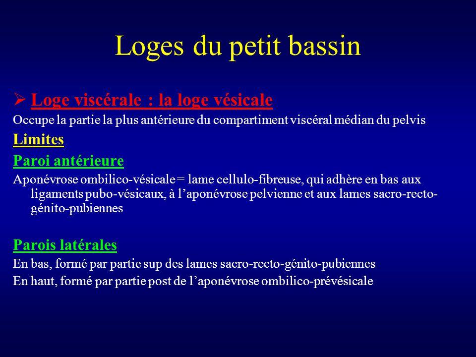 Loges du petit bassin Loge viscérale : la loge vésicale Limites