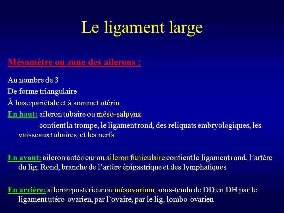Le ligament large Mésomètre ou zone des ailerons : Au nombre de 3