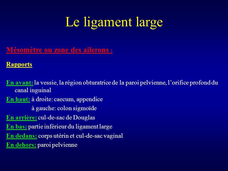 Le ligament large Mésomètre ou zone des ailerons : Rapports