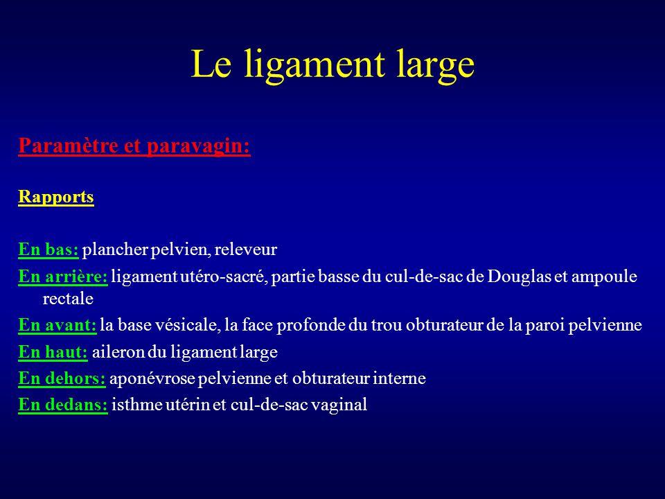Le ligament large Paramètre et paravagin: Rapports