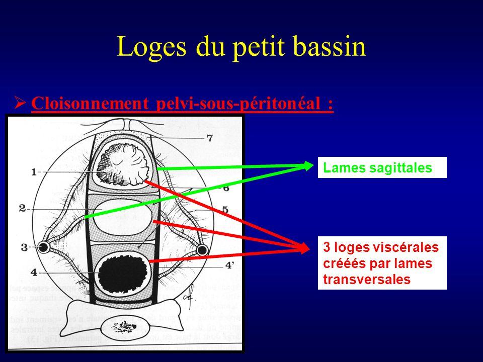 Loges du petit bassin Cloisonnement pelvi-sous-péritonéal :