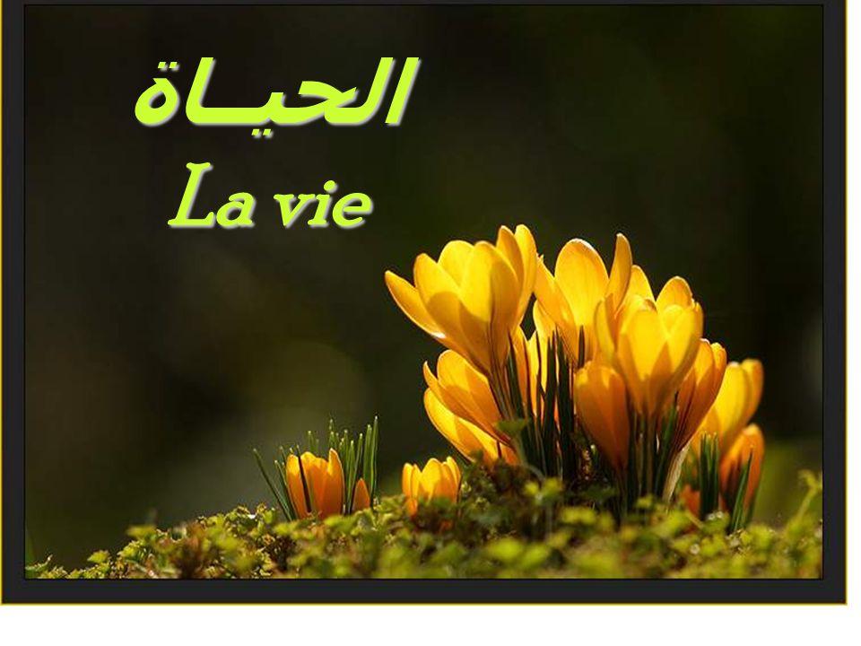 الحيــاة La vie