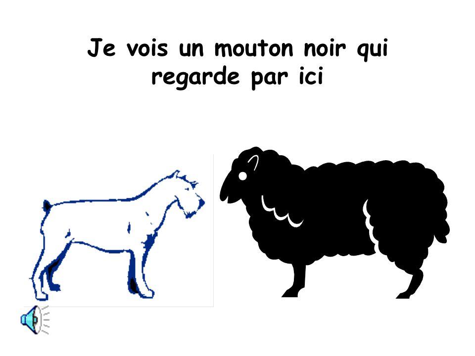 Je vois un mouton noir qui regarde par ici