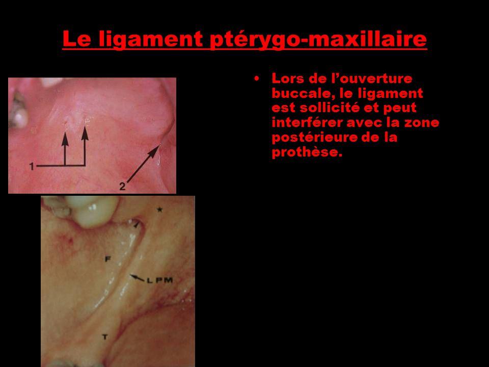 Le ligament ptérygo-maxillaire
