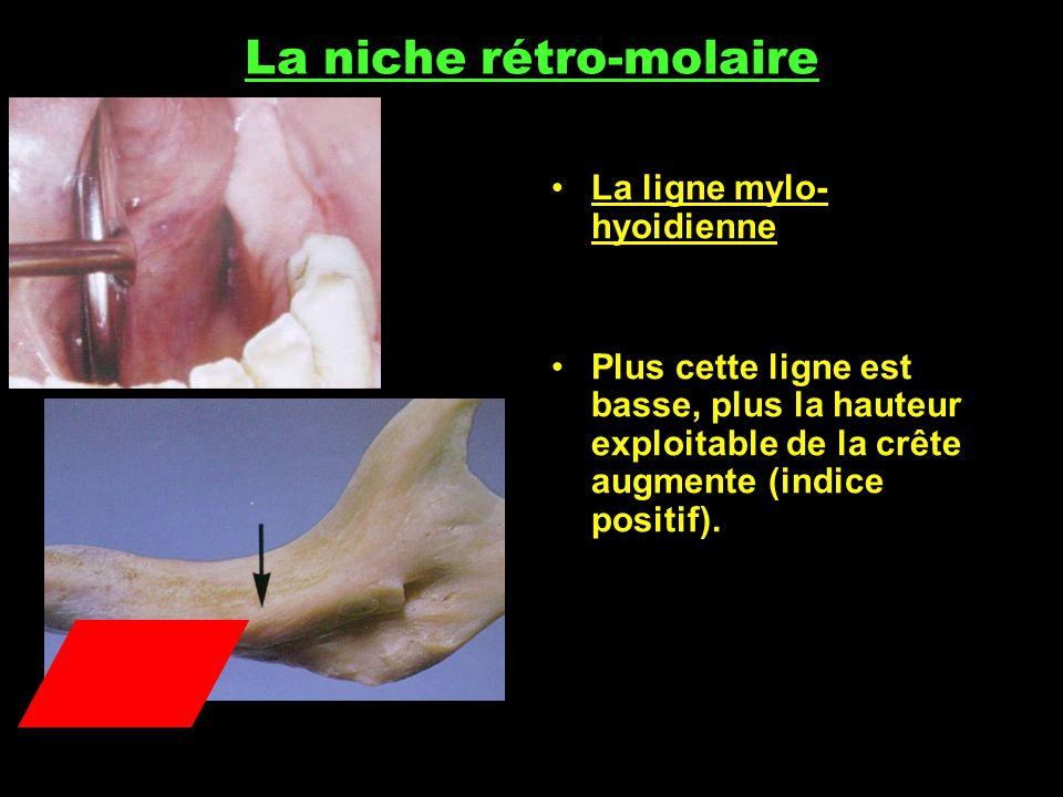 La niche rétro-molaire