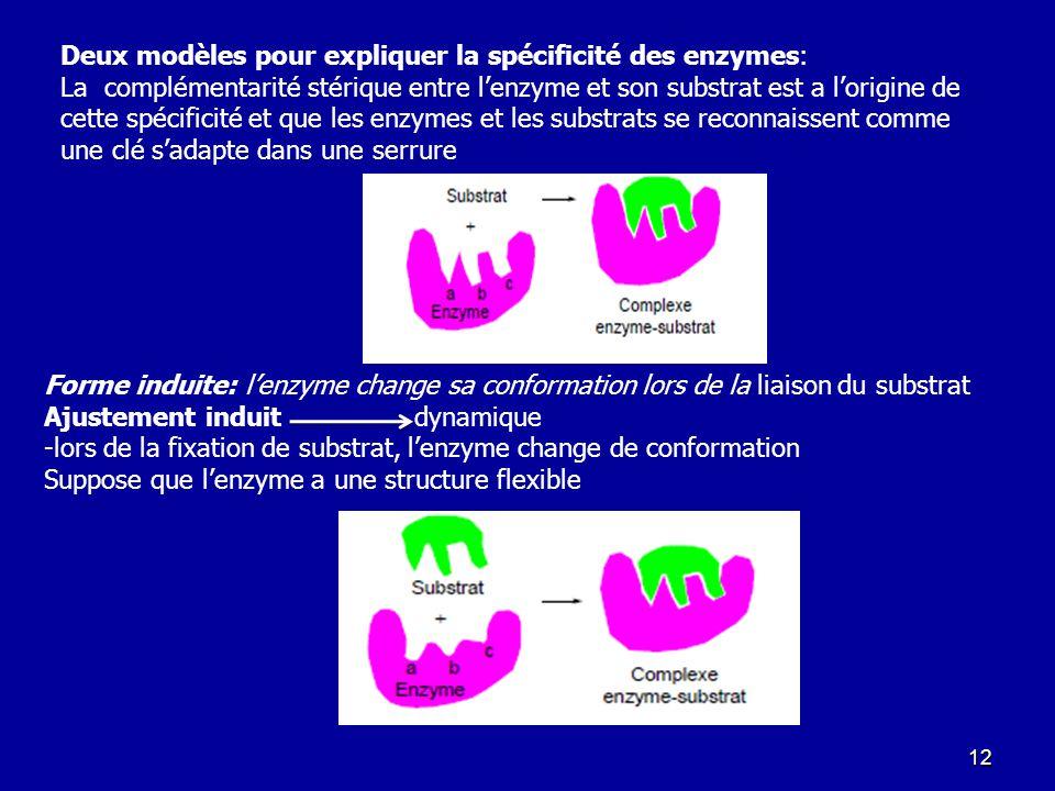 Deux modèles pour expliquer la spécificité des enzymes: