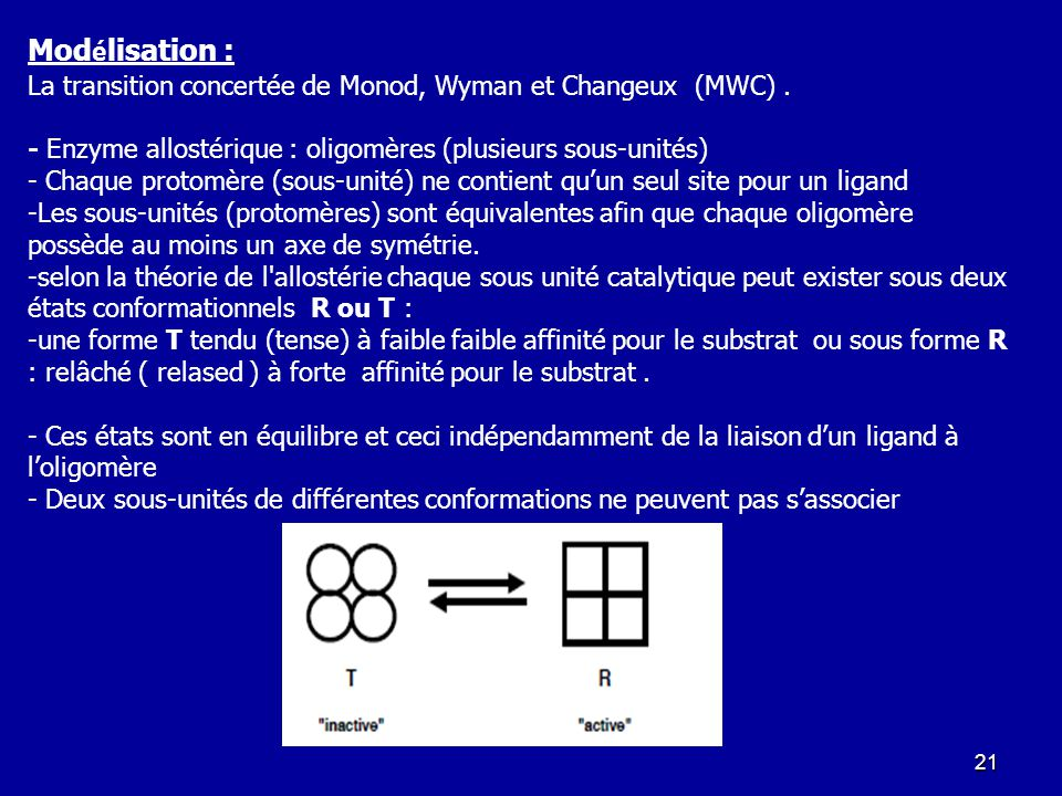 Modélisation : La transition concertée de Monod, Wyman et Changeux (MWC) . - Enzyme allostérique : oligomères (plusieurs sous-unités)