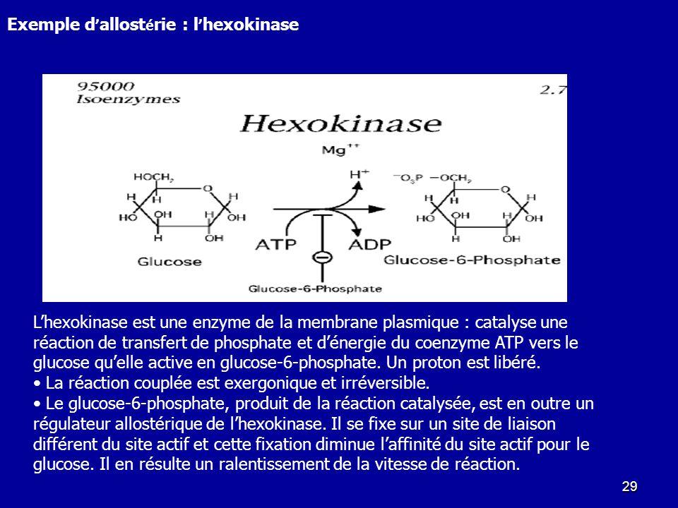 Exemple d'allostérie : l'hexokinase