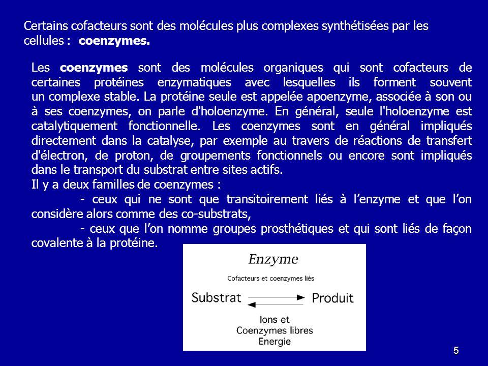 Certains cofacteurs sont des molécules plus complexes synthétisées par les cellules : coenzymes.