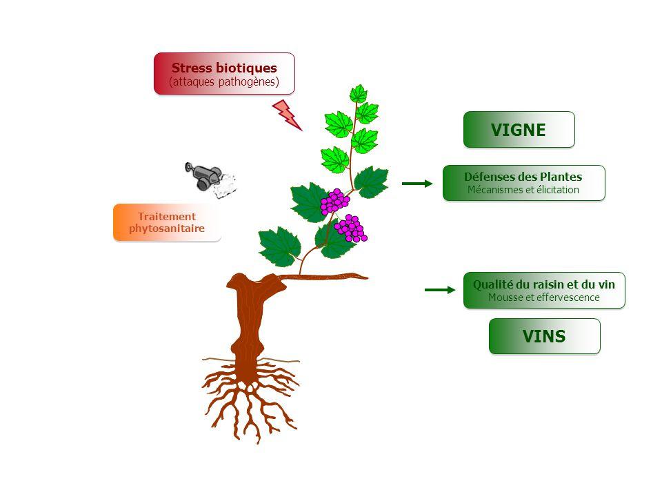Les strat gies alternatives de lutte contre les maladies - Maladie du raisin photo ...