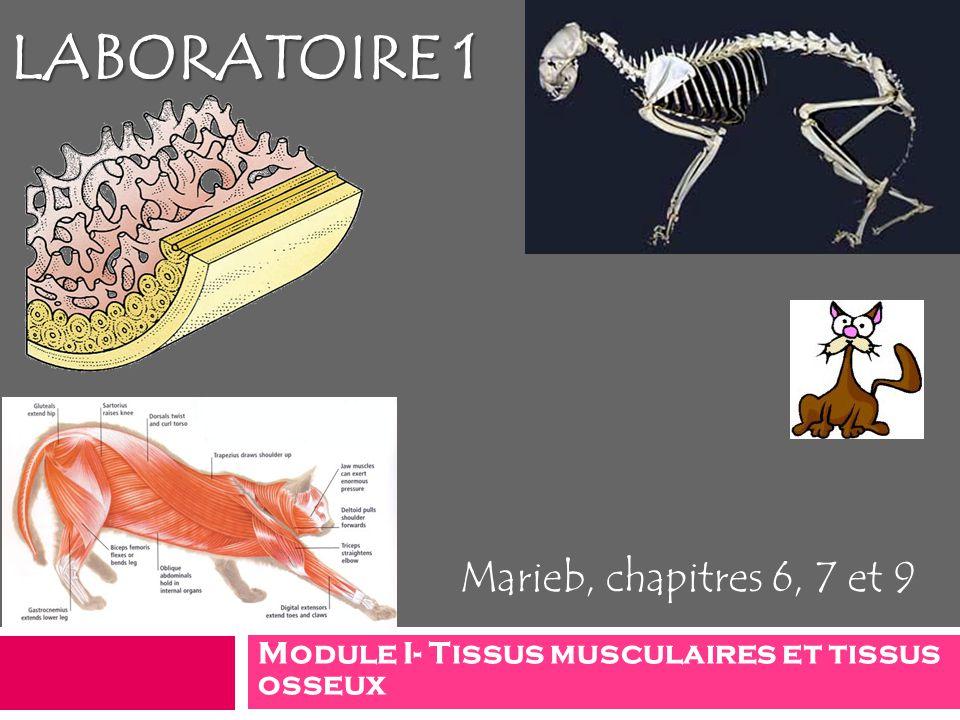 Module I- Tissus musculaires et tissus osseux