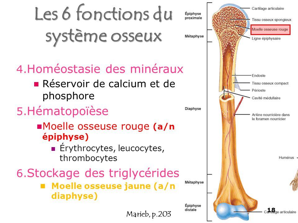 Les 6 fonctions du système osseux
