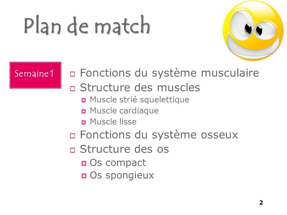 Plan de match Fonctions du système musculaire Structure des muscles