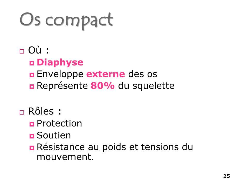 Os compact Où : Rôles : Diaphyse Enveloppe externe des os
