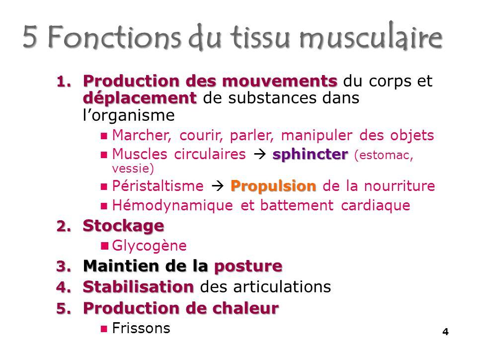 5 Fonctions du tissu musculaire