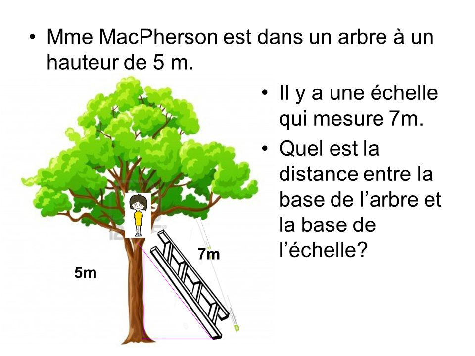 Mme MacPherson est dans un arbre à un hauteur de 5 m.