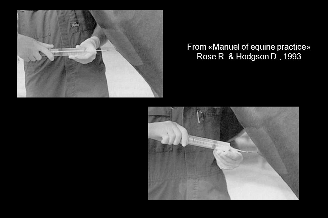 From «Manuel of equine practice» Rose R. & Hodgson D., 1993