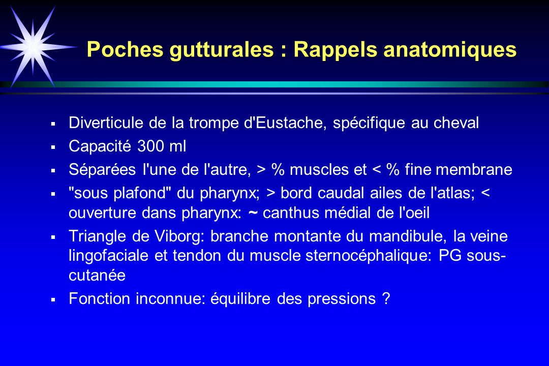 Poches gutturales : Rappels anatomiques