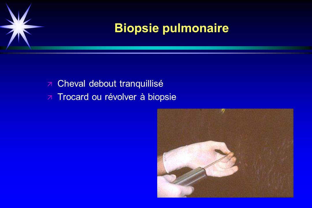 Biopsie pulmonaire Cheval debout tranquillisé