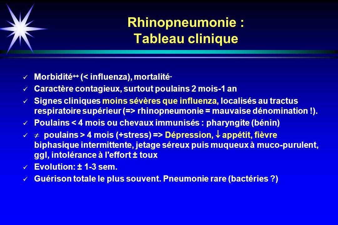 Rhinopneumonie : Tableau clinique