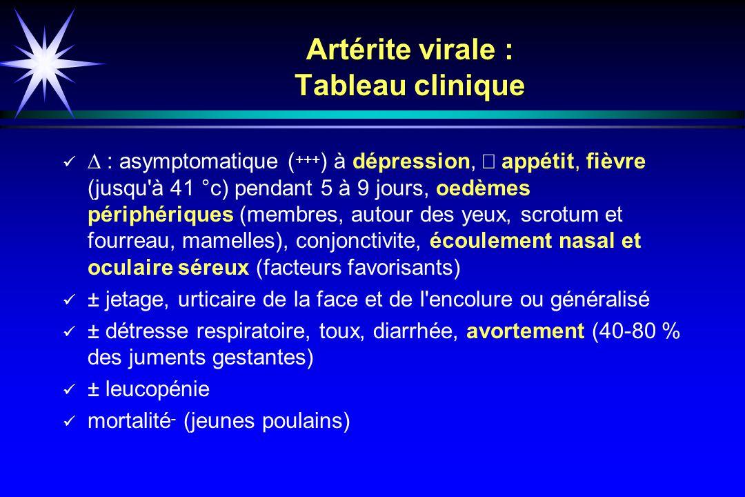 Artérite virale : Tableau clinique