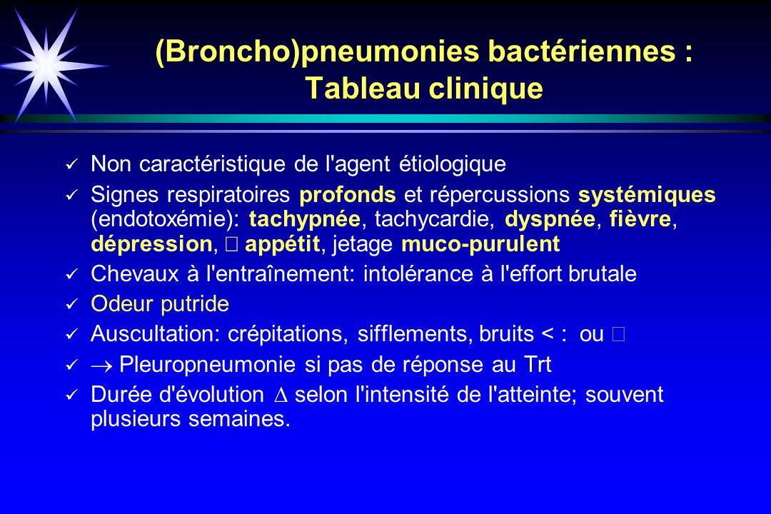 (Broncho)pneumonies bactériennes : Tableau clinique