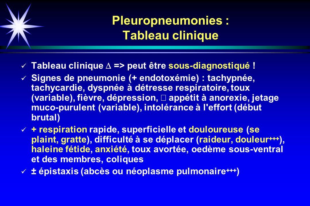 Pleuropneumonies : Tableau clinique