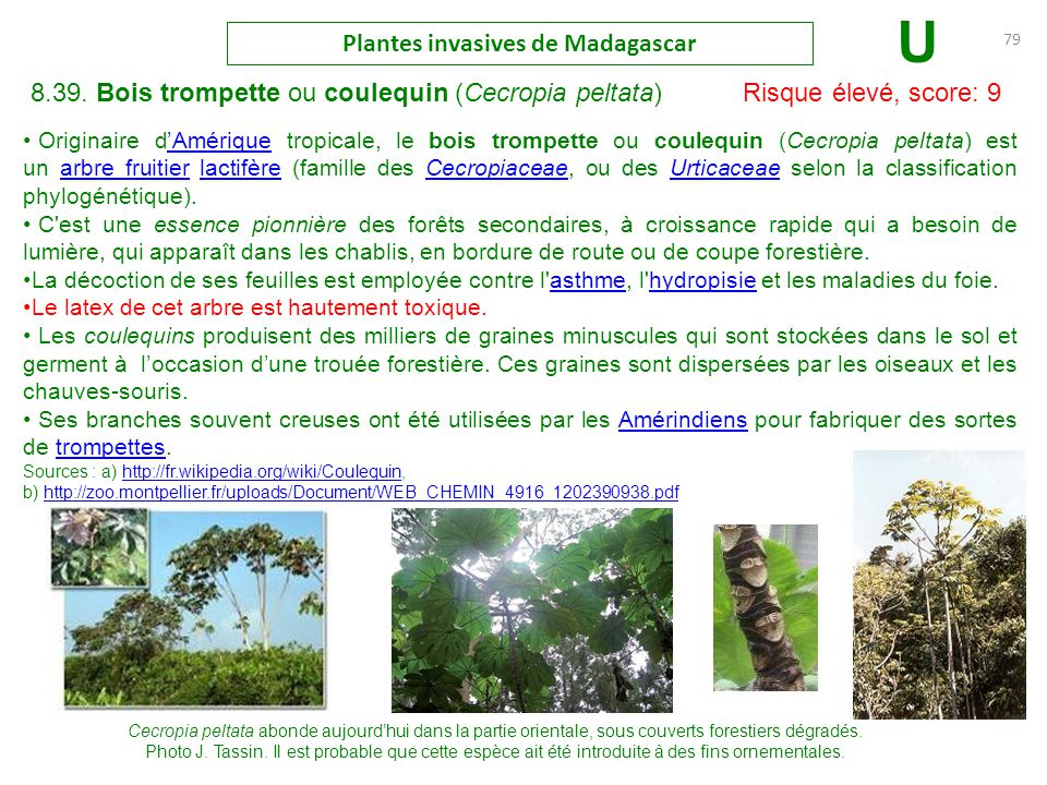 Les plantes invasives madagascar ppt t l charger for Plante 150 maladies madagascar