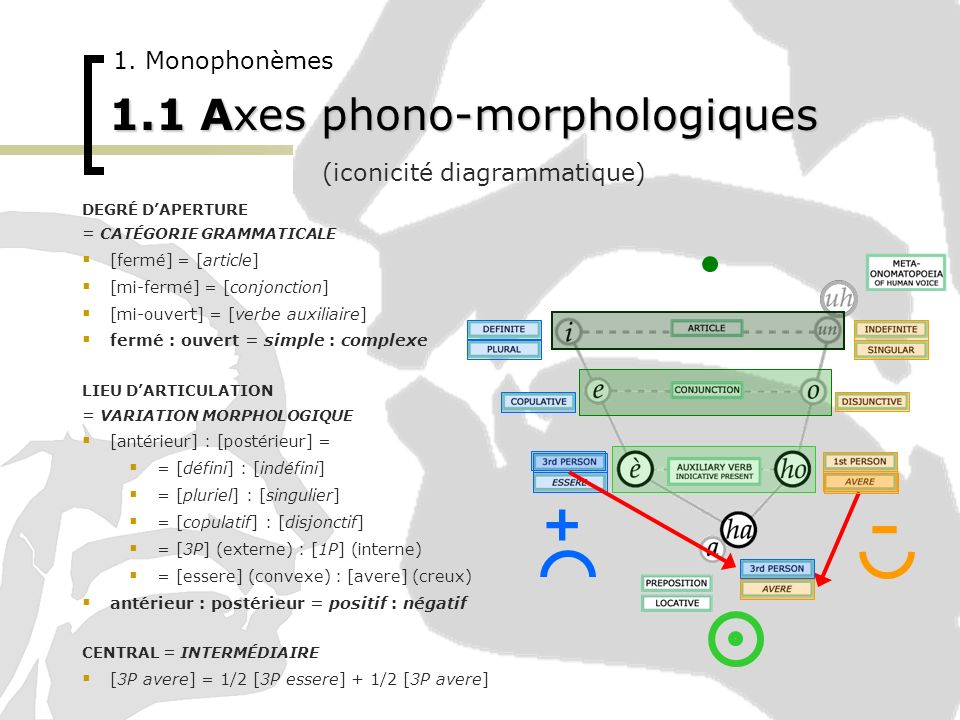 1.1 Axes phono-morphologiques