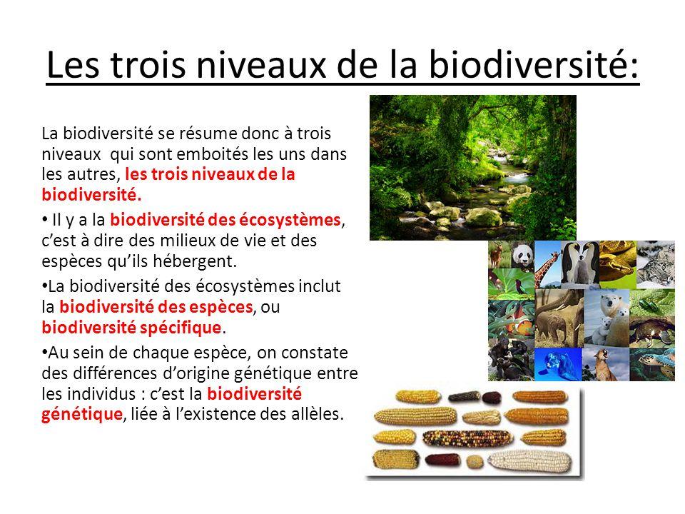 les trois niveaux de la biodiversit u00e9
