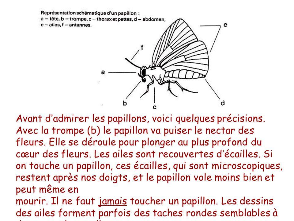 Avant d admirer les papillons voici quelques pr cisions - Peut on mourir en se coupant les veines ...