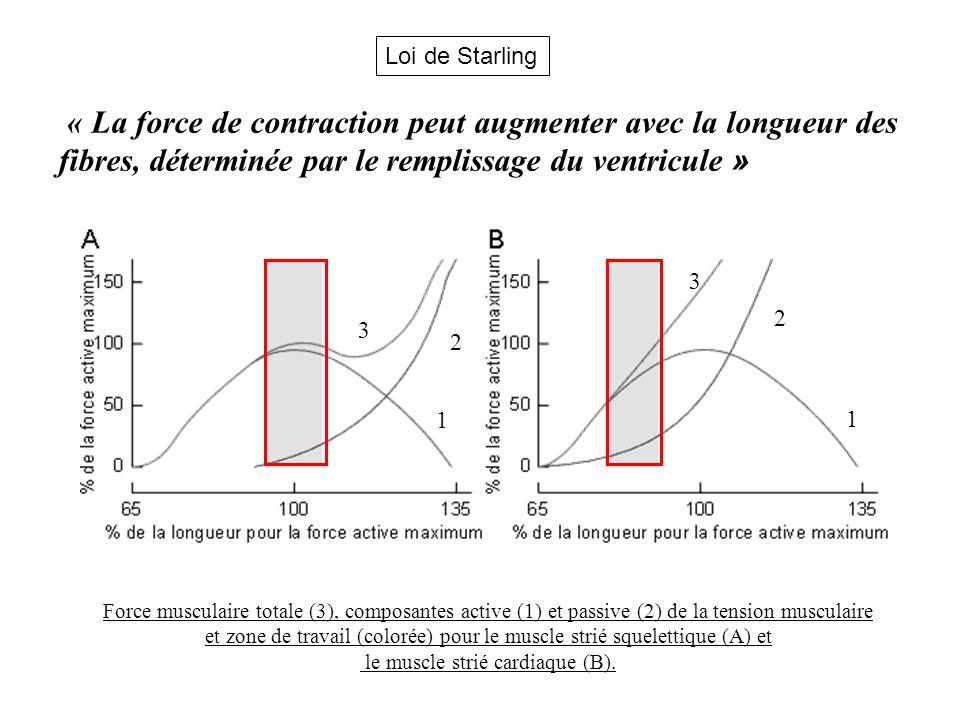Loi de Starling « La force de contraction peut augmenter avec la longueur des fibres, déterminée par le remplissage du ventricule »